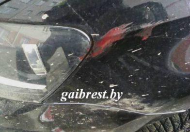 В центре г. Жабинка автомобиль сбил оленёнка