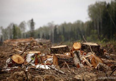 Охрана природы: в Брестской области подано исков почти на 130 тысяч рублей