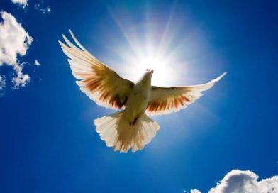 Кветнік духоўны: мудрасць у кожным слове