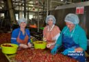 «Заготовка клубники» Малоритскому КОСКу нужно 50 тонн  ягоды (Малорита)