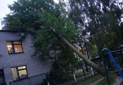 В Брестской области более 15 раз за сутки спецслужбы выезжали на сообщения из-за упавших деревьев
