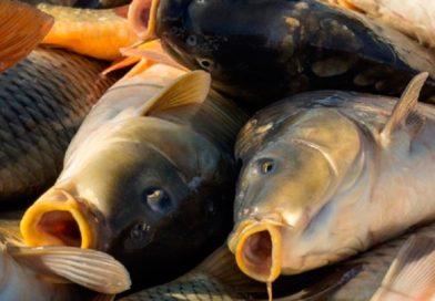 В Малоритском районе с рыбхоза пытались украсть 350 кг рыбы