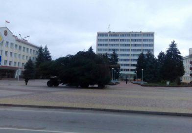 Откуда в Малориту привезли новогоднюю елку? Нет, не из леса….