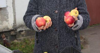 «У настоящих хозяев и коровы доятся, и яблоки — на загляденье!» СПК «Доропеевичи» (Малоритский район)