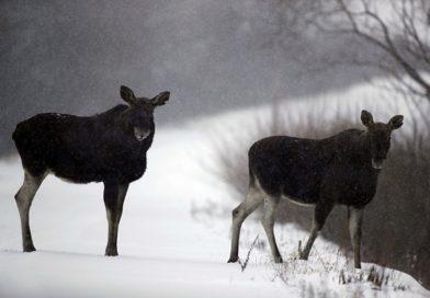 Встреча в лесу с диким зверем. Что делать?