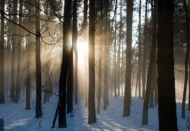 В Малоритском районе пропала женщина — нашли в лесу