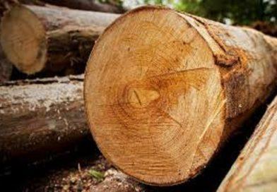 «Упал на бревно?» Житель Орехово умер от полученных травм (Малоритский район)
