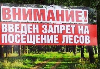 В Малоритском районе введён запрет на посещение лесов