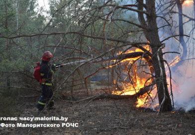 И снова палы…, а выгорают гектары леса (Малоритский район)