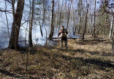 «Ситуация ухудшается» Лесной пожар на территории Малоритского лесничества