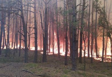 В Малоритском районе снова горел лес — на 10 гектарах (фото)