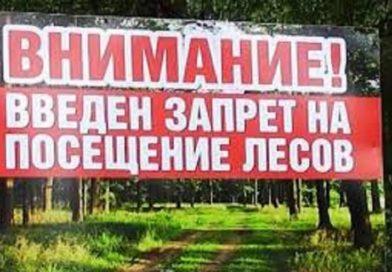 В Малоритском районе введён запрет на посещение леса