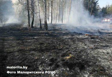 В Малоритском районе горел лес