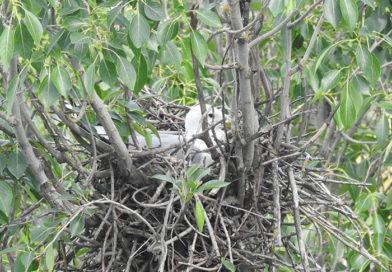 В Бресте учёные выявили уникальное гнездование редкого вида птиц