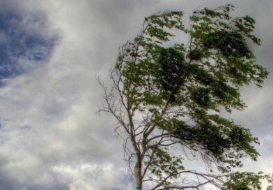 На Брестчине усиление ветра — будьте осторожны. Оранжевый уровень опасности