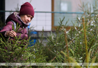 Более 60 елочных базаров развернется в Брестской области