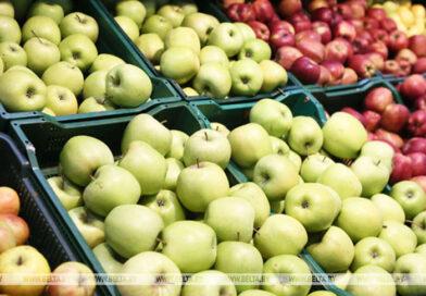 Житель Брестской области похитил 20 тонн яблок